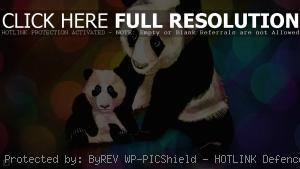 Нарисованные панды